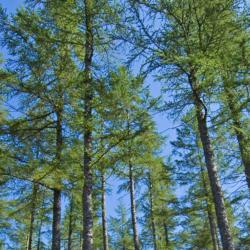 Glen Tanar forestry