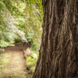 Old Woodlands at Glen Tanar