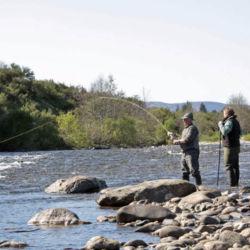 Waterside & Ferrar Beat, River Dee