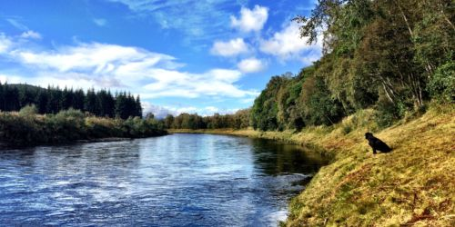 Taking in the view, River Dee