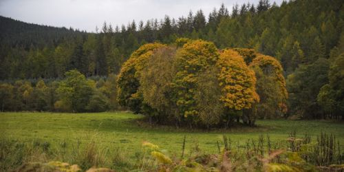 Autumn in Glen Tanar