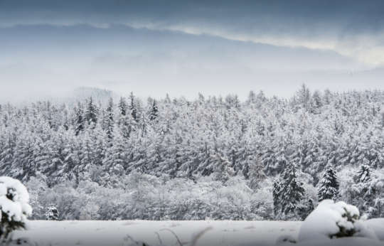 Winter holiday destination in Scotland Glen Tanar