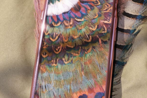 Pheasant Feathers - from mirrors to shoes!