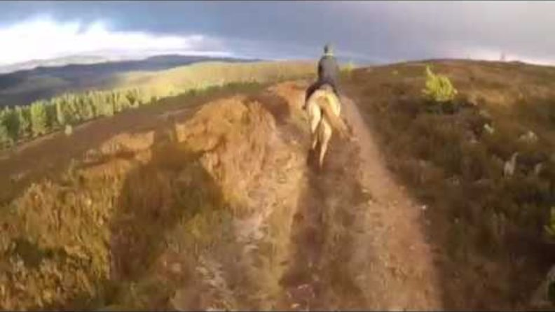 A horse riders view of riding at Glen Tanar