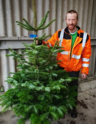 Duncan With Nordmann Fir