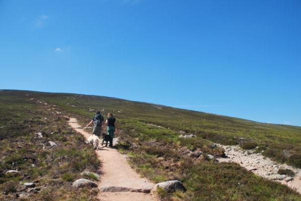 Mt Keen Path Repair 3