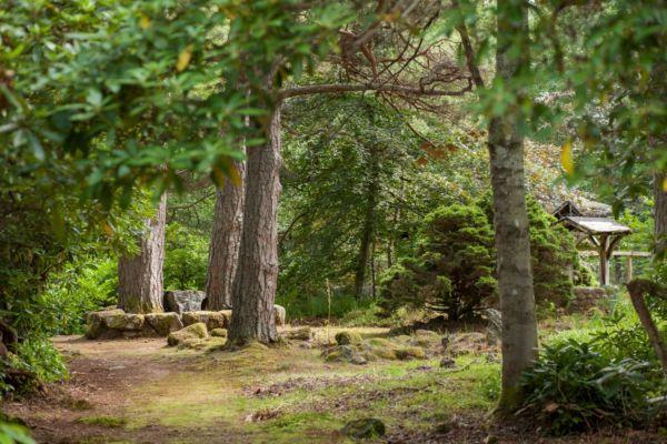 Pine Trees Compressed