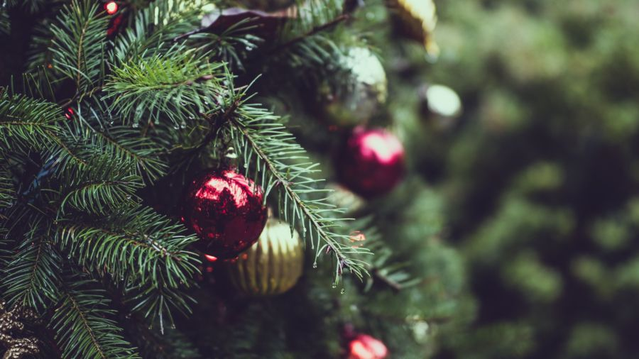How to pick the perfect real Christmas Tree: a quick guide