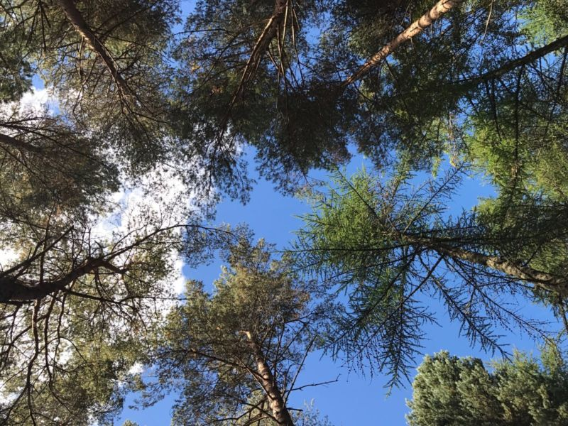 Glen Tanar Estate Forest Plan Renewal